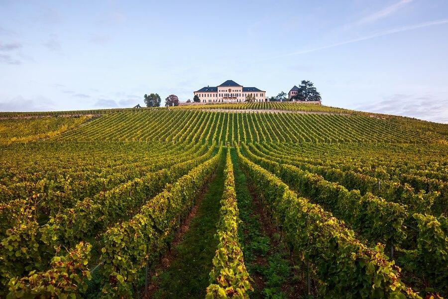 Победители The World's Best Vineyards 2021 года будут объявлены 20 сентября
